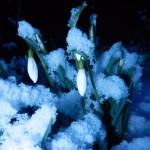 Schneegloeckchen - am Mittwoch