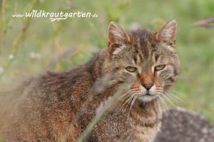 Katzen fressen hin und wieder Gras