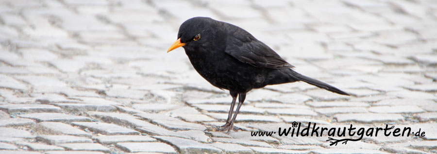 Wildvogelfuetterung