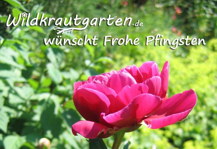 Wildkrautgarten wuenscht frohe Pfingsten