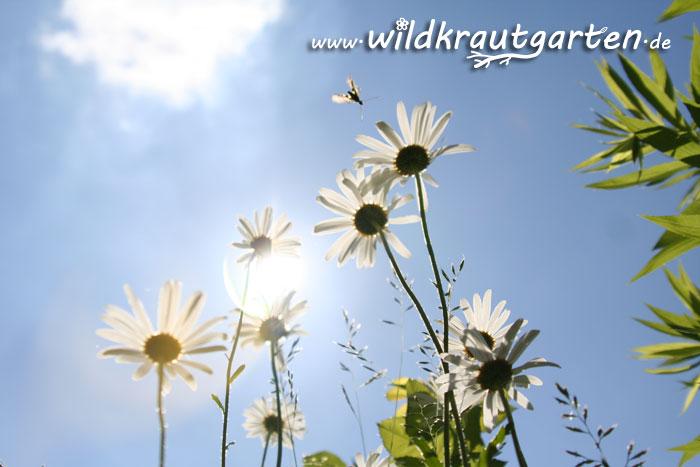 Wildkrautgarten - Bestimmt wirds bald Sommer!
